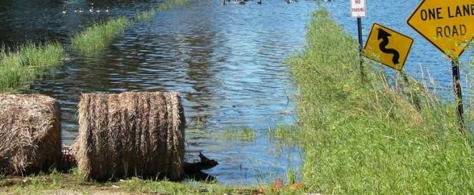 Flooded hay bales